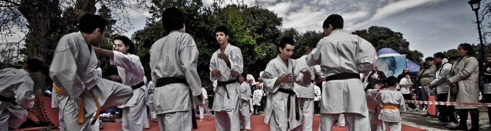 Sensei dojo banner